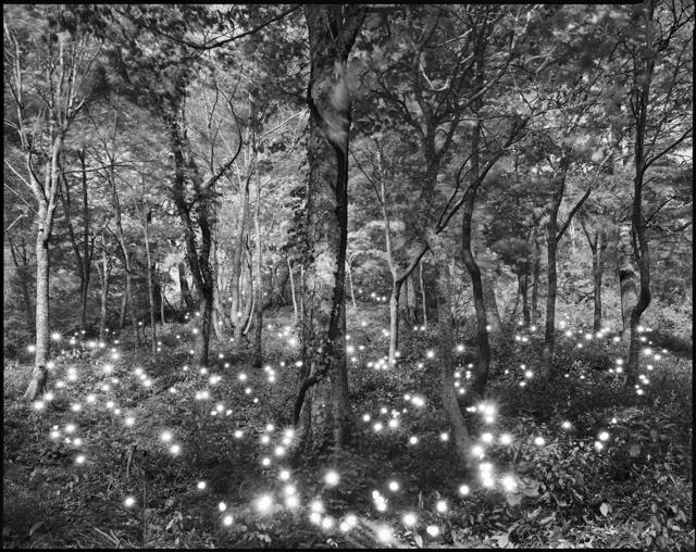 Tokihiro Sato, 'Photo Respiration Trees Shirakami #10', 2008, Micheko Galerie