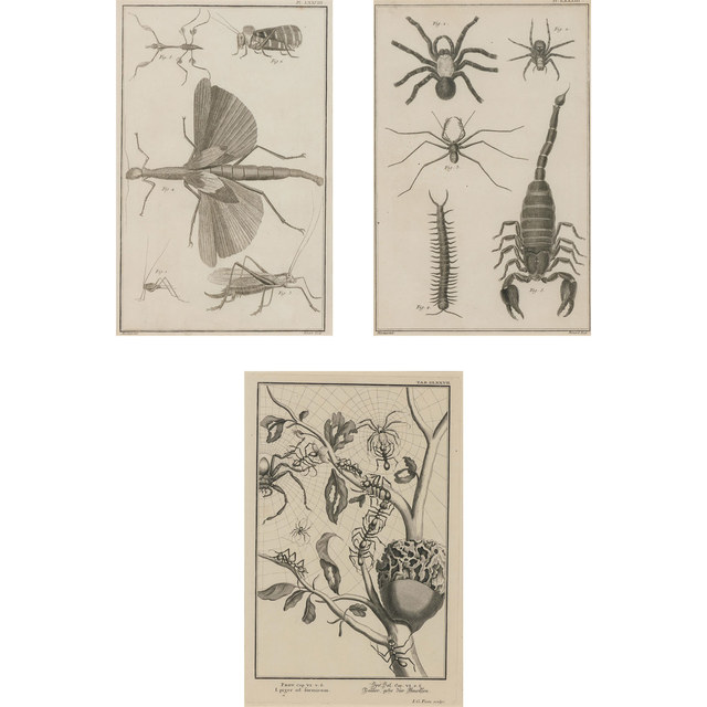 After Martinet, '[INSECTS, ARACHNIDS AND MYRIAPODS]', Doyle