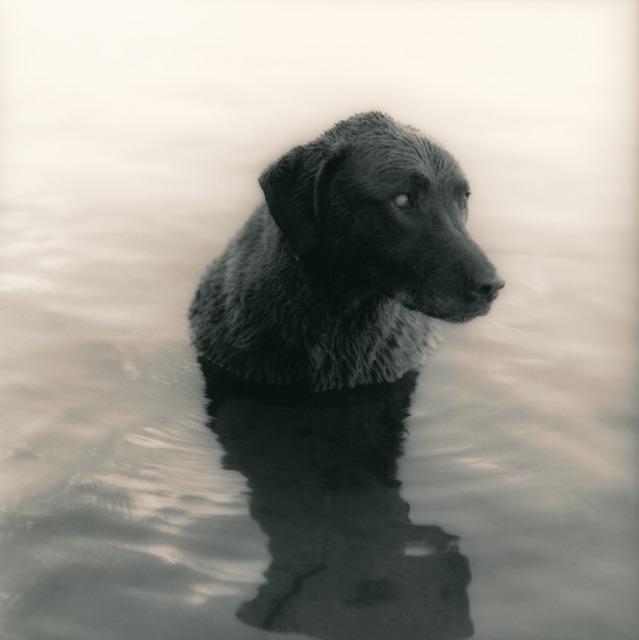 Ken Rosenthal, 'Near Twilight', 2010, Photography, Split-Toned Gelatin Silver Print, photo-eye Gallery