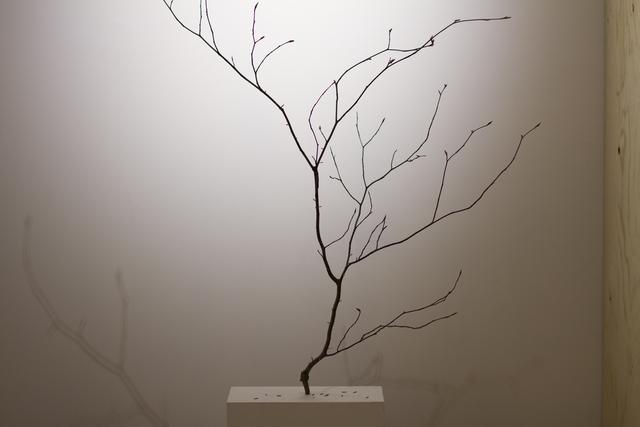 , 'Sujet épineux,' 2016, Art Mûr