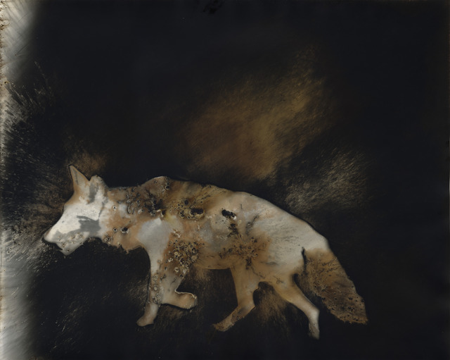 Christopher Colville, 'Coyote 7', 2016, Etherton Gallery