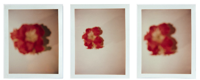 Andy Warhol, 'Andy Warhol, Set of Three Polaroid Photograph of Flowers, 1970s', 1970s, Hedges Projects