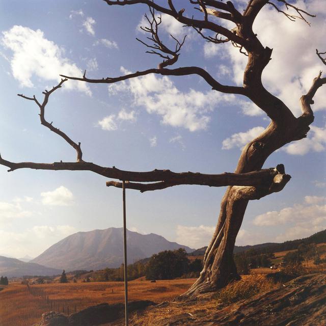 Dianne Bos, 'Burmis Tree', 2012, Newzones