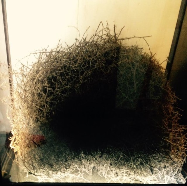 , 'Ready donne,' 2015, Barro Arte Contemporáneo