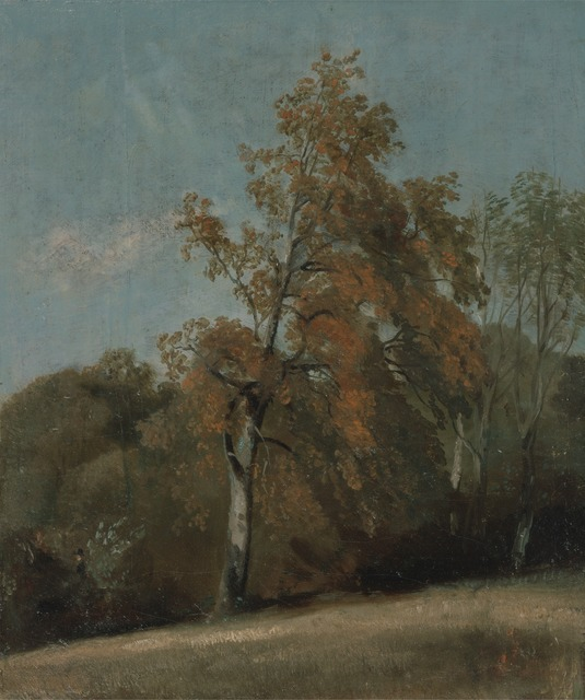 John Constable, 'Study of an Ash Tree', between 1801 and 1803 or between 1810 and 1830, Yale Center for British Art
