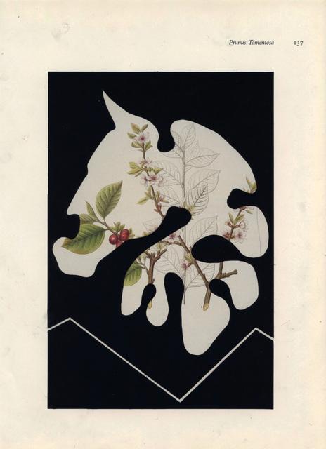 , 'Prunus Tomentosa,' 2016, Eric Buterbaugh Gallery