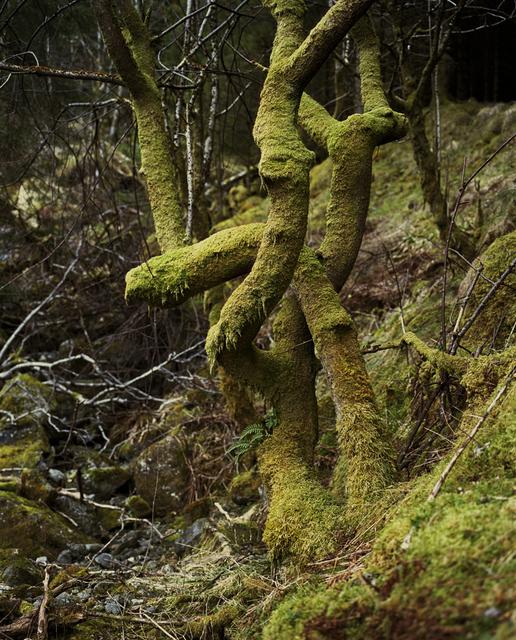 , 'Twisted Green Trunk,' 2011, Andréhn-Schiptjenko