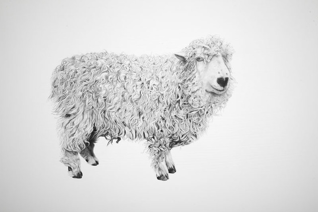 Robert Davies, 'Curly (Aged 12 when the drawing was made. Originally from Devonhas been at the Farm Animal Sancture for 6 years).', 2009, JHB Gallery
