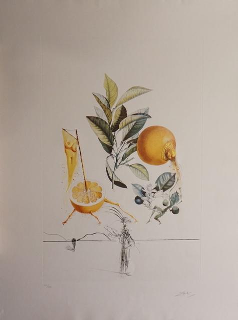 Salvador Dalí, 'FLorDali/Les Fruits Grapefruit', 1969, Print, Etching, Fine Art Acquisitions Dali