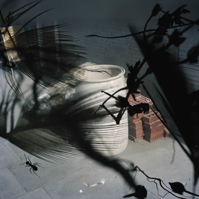 , 'Untitled (ant with bricks), from the series 'Talking to Ants',' 2009-2012, CHRISTOPHE GUYE GALERIE