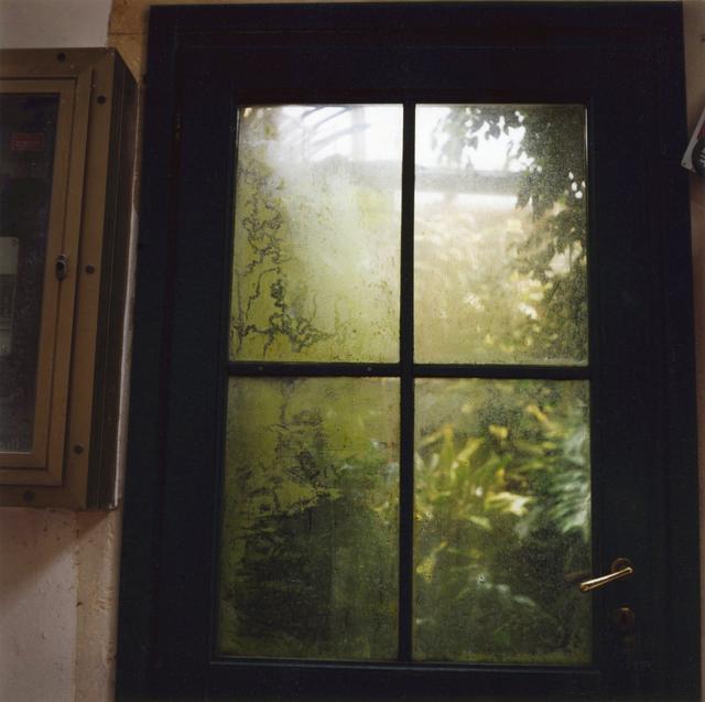 , 'Padua Botanical #13,' 2013, Newzones
