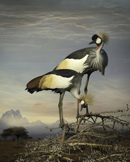 , 'Grey Crowned Cranes,' 2014, PDNB Gallery