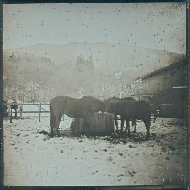 , 'Horses. Tono January 22 ,' 2016, Purdy Hicks Gallery