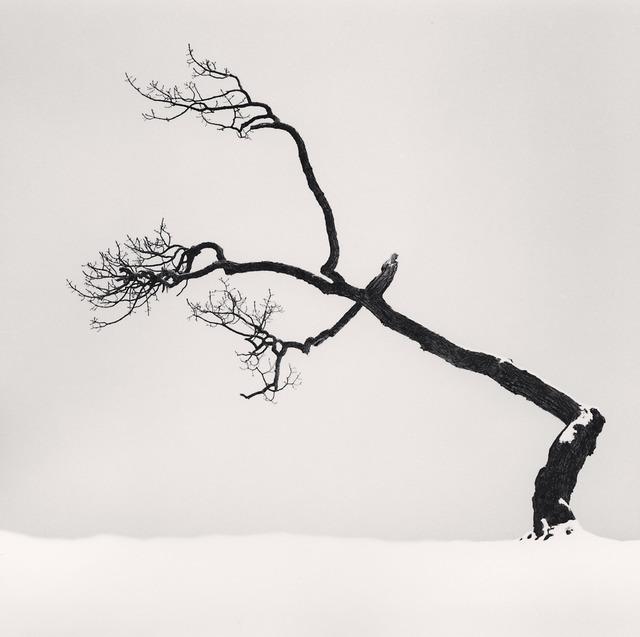 , 'Kussharo Lake Tree, Study 6, Kotan, Hokkaido, Japan,' 2007, Vision Neil Folberg Gallery