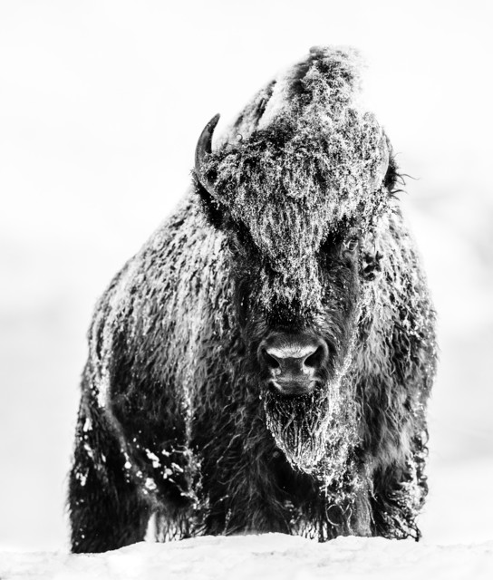David Yarrow, 'The Beast ', Visions West Contemporary