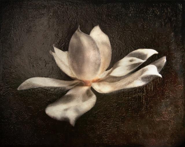 , 'Glass Magnolia,' 2015, Bill Lowe Gallery