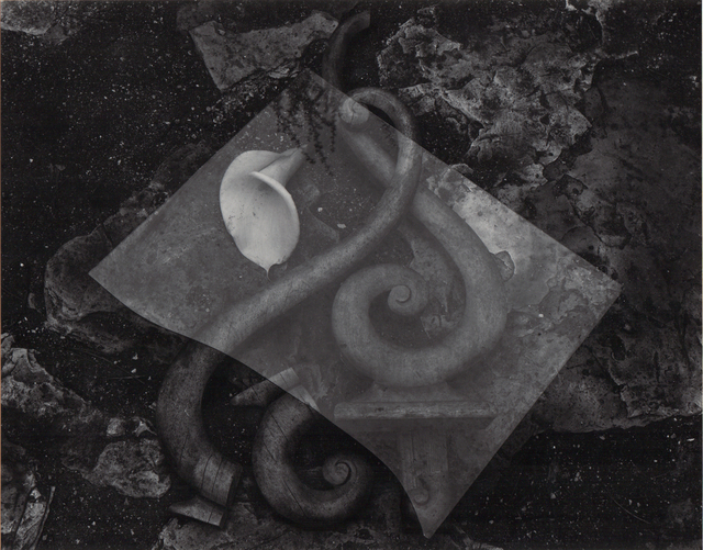 , 'Glass and Lily,' Neg. date: 1939 / Print date: Later, Alan Klotz Gallery