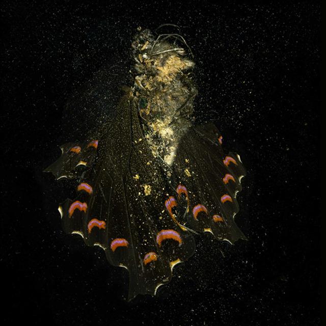 """, '""""Insecticide"""" (N° 28),' 2012, Galleria Raucci / Santamaria"""
