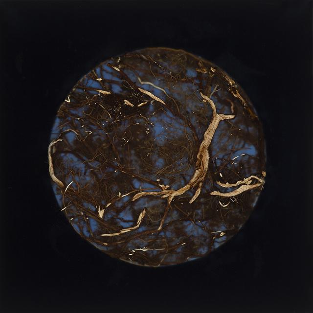 , 'Root Moon,' 2018, Lisa Sette Gallery