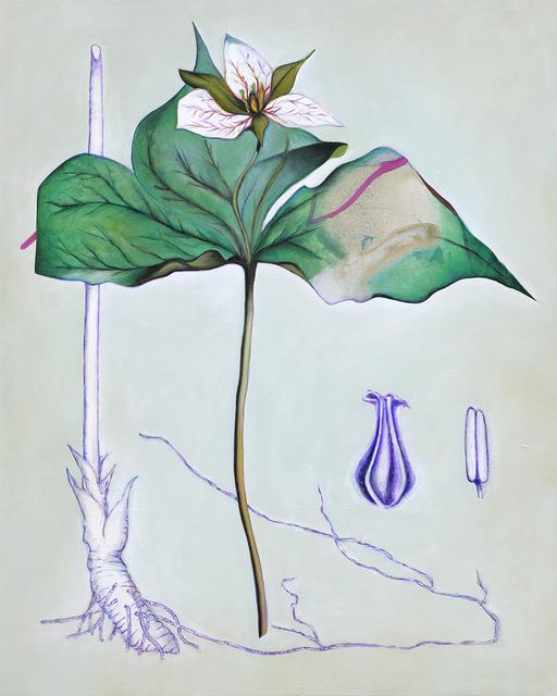 Fiona Ackerman, 'Death Flower Birth Root', 2019, Oeno Gallery