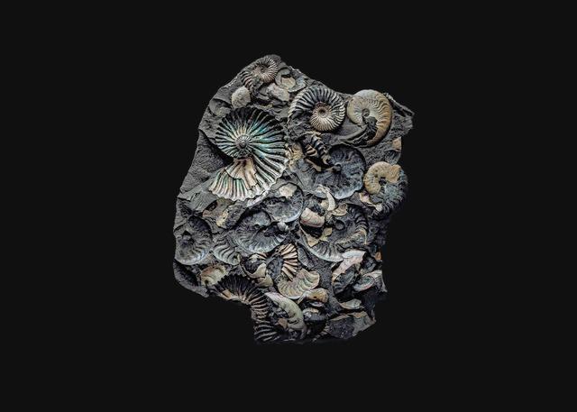 andrey akimov, 'Fossil#5', 2019, Galería silvestre