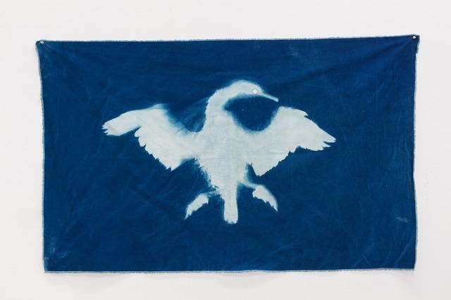 , 'Cormorant 1 (Straight of Magellan),' 2014, Nina Johnson