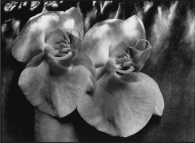 , 'Orchids,' , Fabrik Projects Gallery
