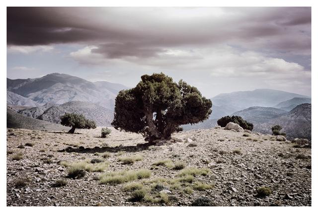 Bernhard Quade, 'Atlas Tree, Morocco', 2014, CHROMA GALLERY