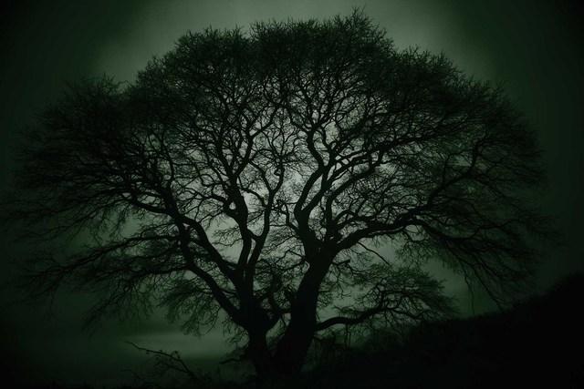 , 'Guardian Tree #7, Asan,' 2018, AN INC.