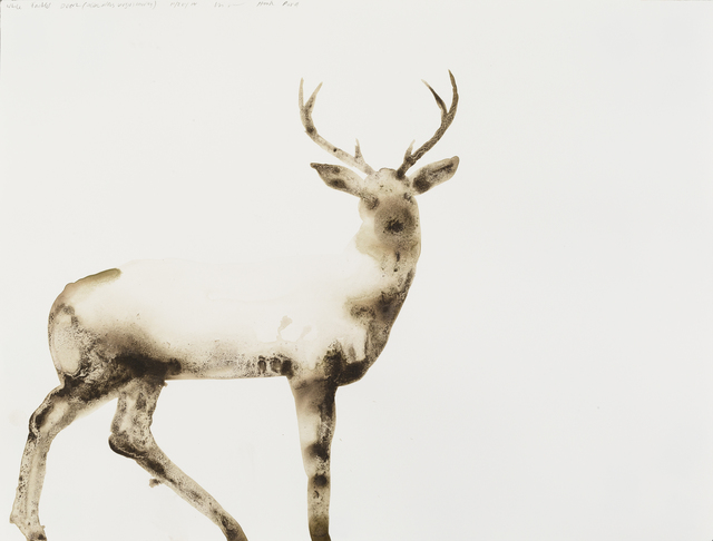 Alexis Rockman, 'White-Tailed Deer (Odocoileus virginianus)', 2014, Parrish Art Museum