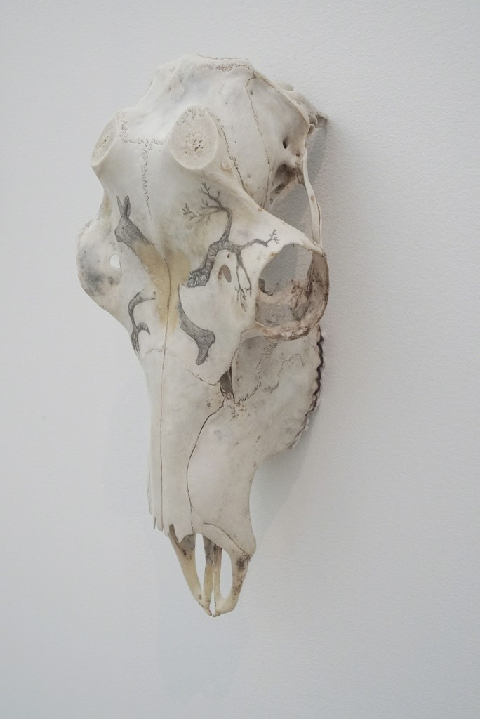 "Tanja Thorjussen ""Tupilaq Relic"" nr 4 2018, Reindeer scull with pencil drawing."