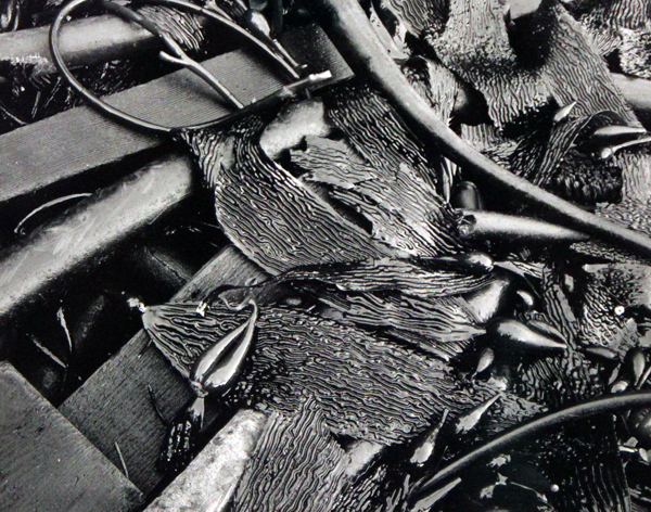 , 'Untitled (Kelp),' 1949, Robert Mann Gallery