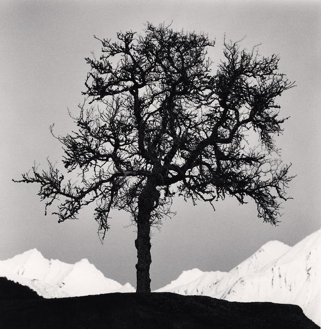 , 'Matagouri Tree, Paradise, Otago, New Zealand.,' 2013, Blue Lotus Gallery