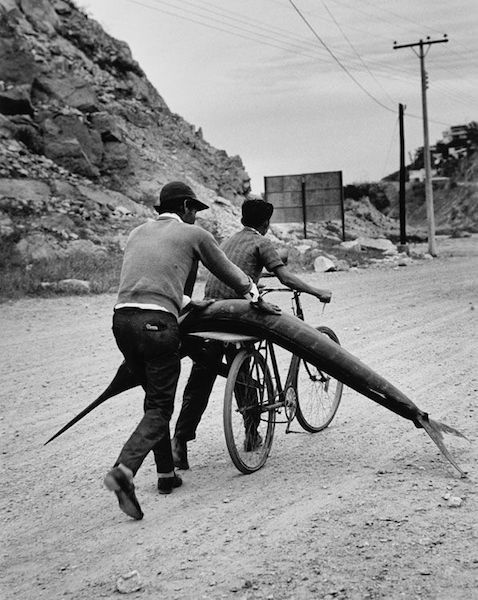 Rodrigo Moya, 'Marlin en Bicicleta, Ensenada, B.C.N., Mexico', 1968, Robert Mann Gallery