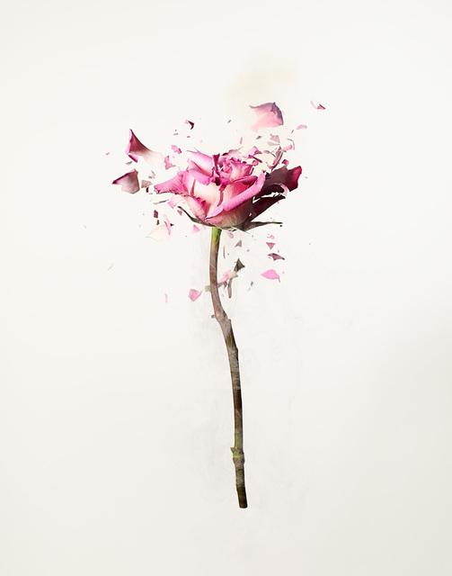 , 'Rose Explosion 1,' , ArtStar