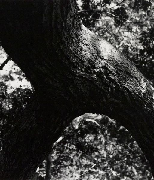 , 'The Tree 108,' 1972, Caviar20