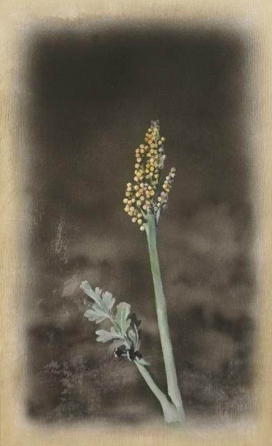 , 'Botrychium Matricariifolium,' 2019, Ani Molnár Gallery