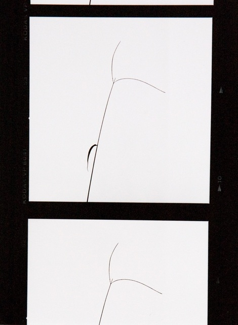 Yasuhiro Ishimoto, 'Untitled', IBASHO