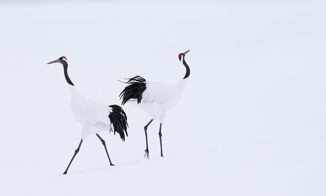 David Yarrow, 'Hokkaido', 2017, Maddox Gallery