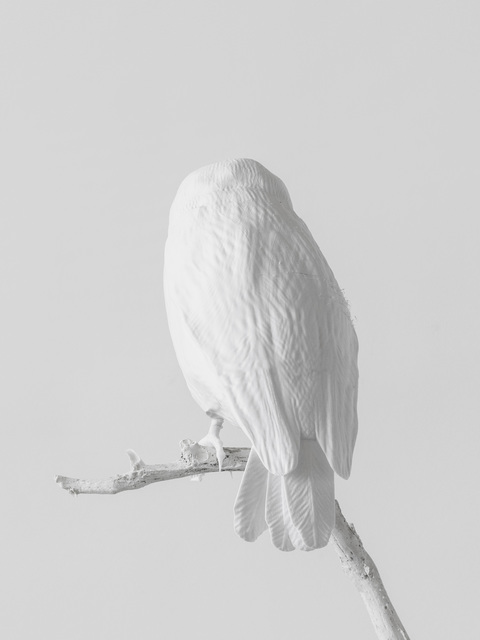 , 'Lost to Sight (Sceloglaux albifacies - back),' 2019, Galleria Heino
