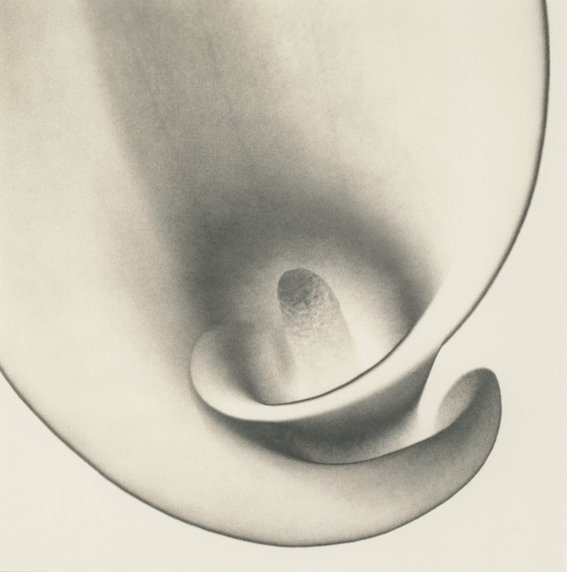 , 'Calla Lily, Study 2,' 1999, Photography West Gallery