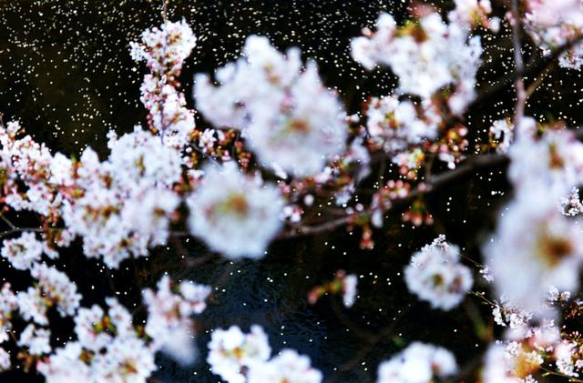 , 'Acid Bloom,' 2003, Tomio Koyama Gallery