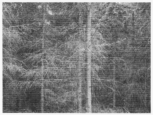 , 'Wald bei Volditz V, 2014,' 2014, Ditesheim & Maffei Fine Art