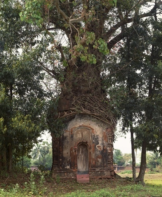 , 'Banyan Tree and 16th Century Terracotta Temple, Attpur, West Bengal, India,' 1998, Benrubi Gallery