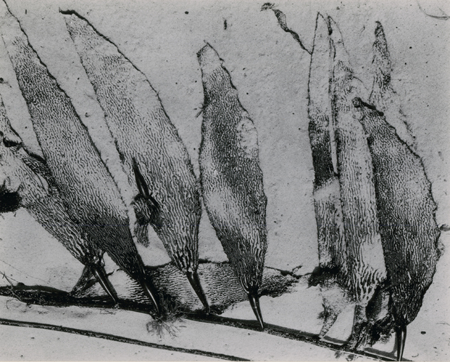 , 'Leaf Abstraction,' 1948, Be-hold