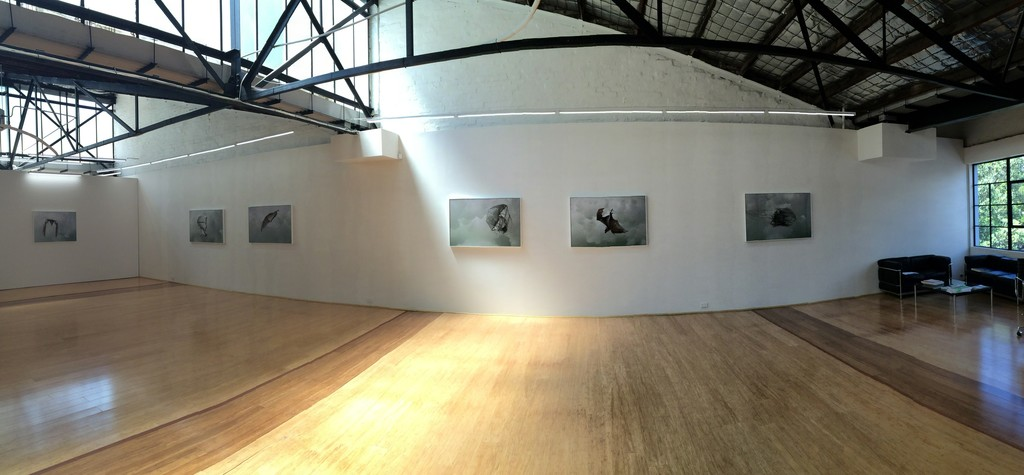 Installation View, Helen Pynor 'The Accidental Primate'