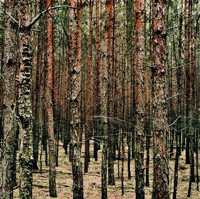 , 'D Kemnitzer Heide 02,' 2008, Bernheimer Fine Art
