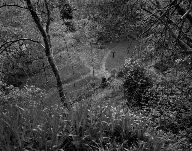 , 'Garden, Laragh,' 2020, Oliver Sears Gallery