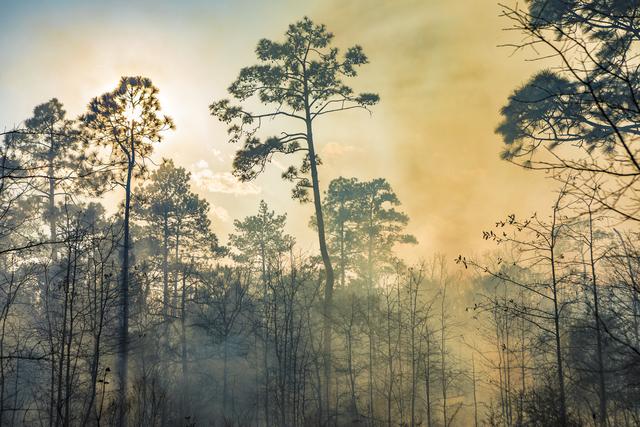, 'Smokey Pines,' 2017, Catherine Couturier Gallery