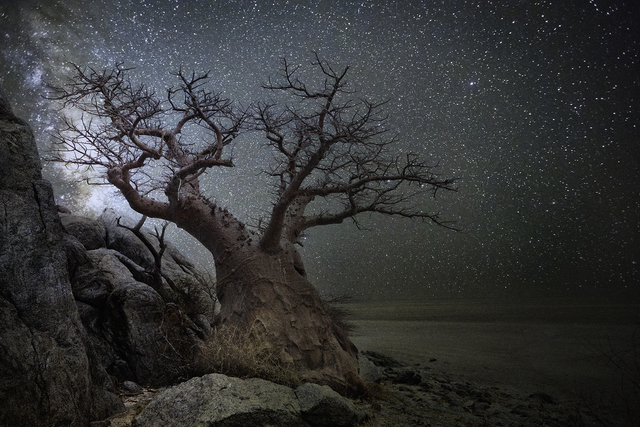 Beth Moon, 'Lyra', Photography, Archival Pigment Print, photo-eye Gallery